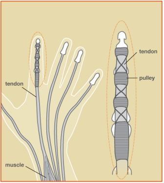 tendon injury treatment raleigh hand center raleigh hand center